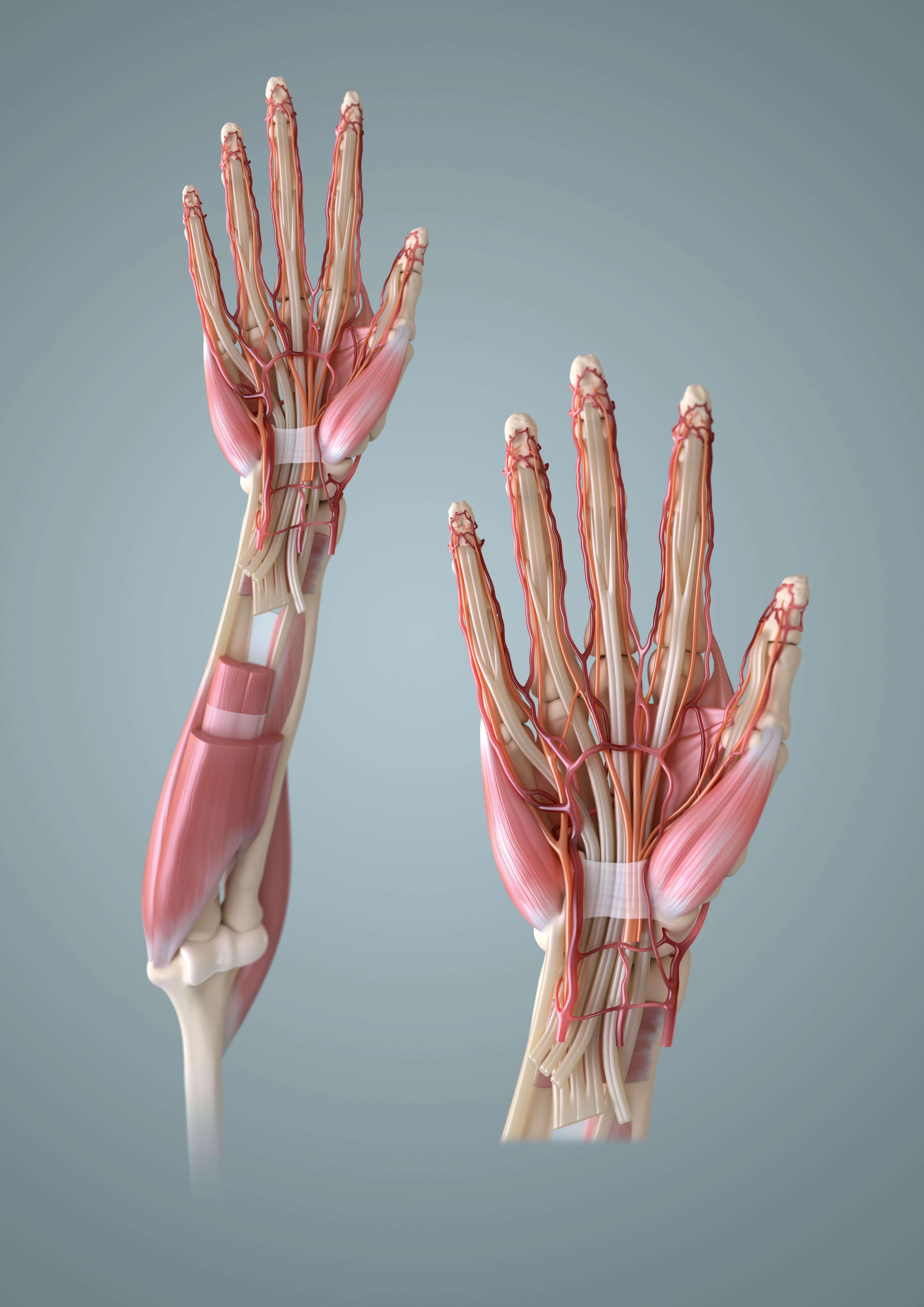 10 Порад, як прокачати навик моделювання анатомії