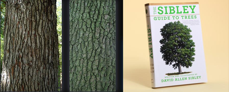 Як зробити текстуру дерева?