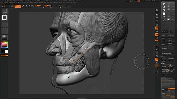 Туторіал по анатомії від Скотта Ітона