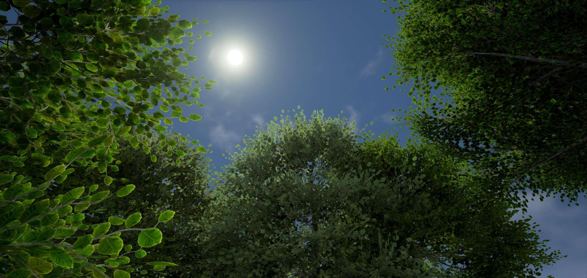 Пак дерев від Lluis Garcia